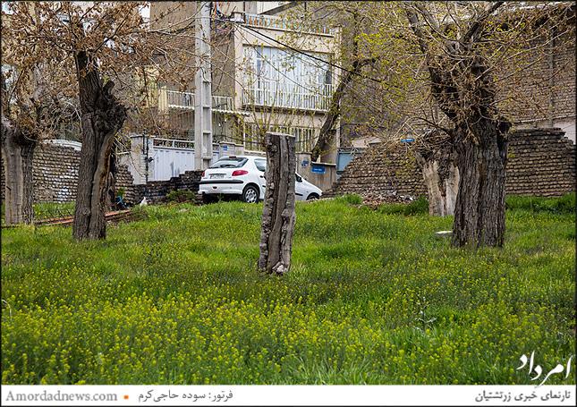 کوچهباغهای تهران روزهای خاموشی و فراموشی را پشت سر میگذارند