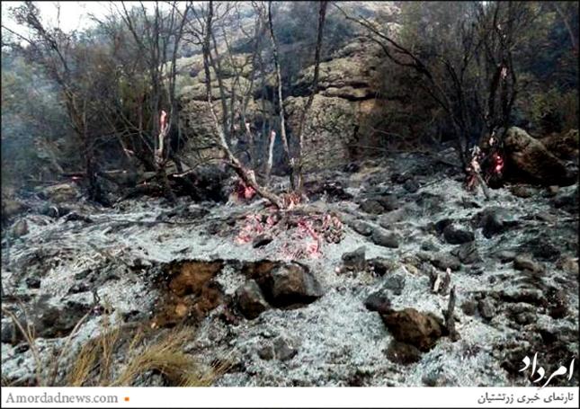 آتش به جان جنگل مروارید افتاد