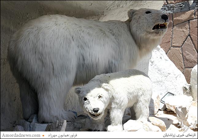 خرس قطبی در پارک ژوراسیک تهران