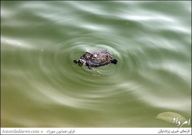 لاکپشت ها و گونه های آبزی
