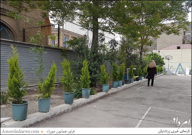 سروهایی که نیکوکاران در حیاط مدرسه خواهند کاشت