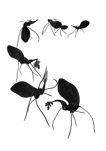نمایشگاه مورچه