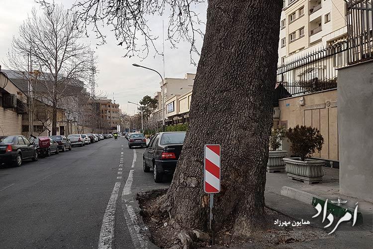 درختان کهنسال حومه ورزشگاه شیرودی ( امجدیه سابق )