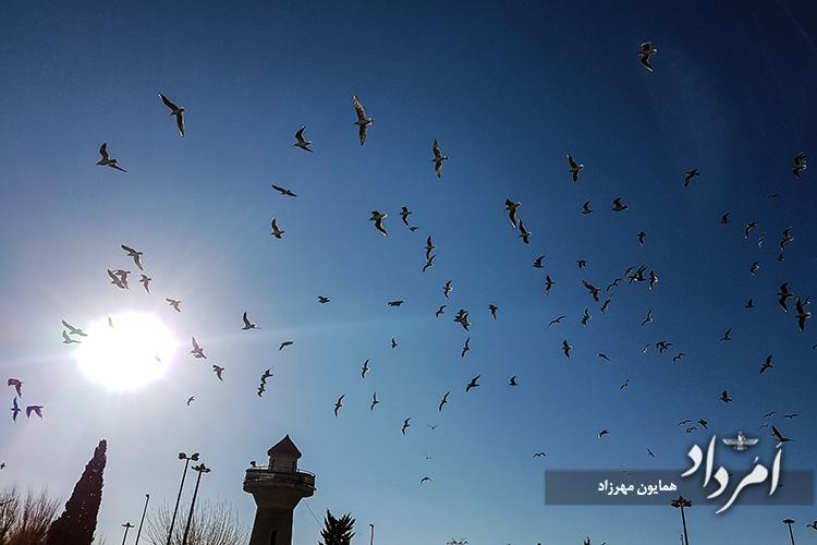 بوستان المهدی در گوشه جنوبی میدان آرادی محله مهرآباد