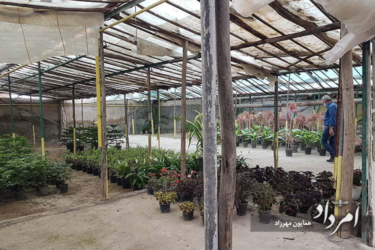راسته پرورش و گلفروشی در محله سلیمانیه